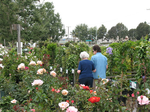 cathy and her mom strolling the roses