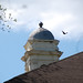 Bird over Rebekah