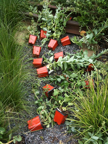 High Line Park flowers awaiting potting