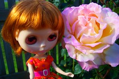 A giant rose for you, Auntie Rupa! :)