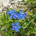 08. Fleurs des Alpes
