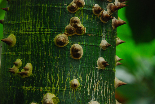 Green thorny tree