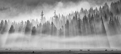 Smokey Sunrise (Jesse Estes) Tags: sunrise washington troutlake jesseestesphotography