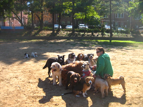 This Dog Walker is Ripping Us ALL Off: walking 14 Dogs at once, some without leashes