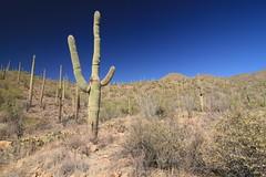 IMG_9577 (simon_travelboy) Tags: arizona tucson saguaronationalpark