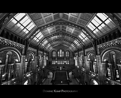National History Museum London (Dominic Kamp) Tags: light white black color london history museum nikon 10 sigma national nik 20 dri dominic kamp d300 efex
