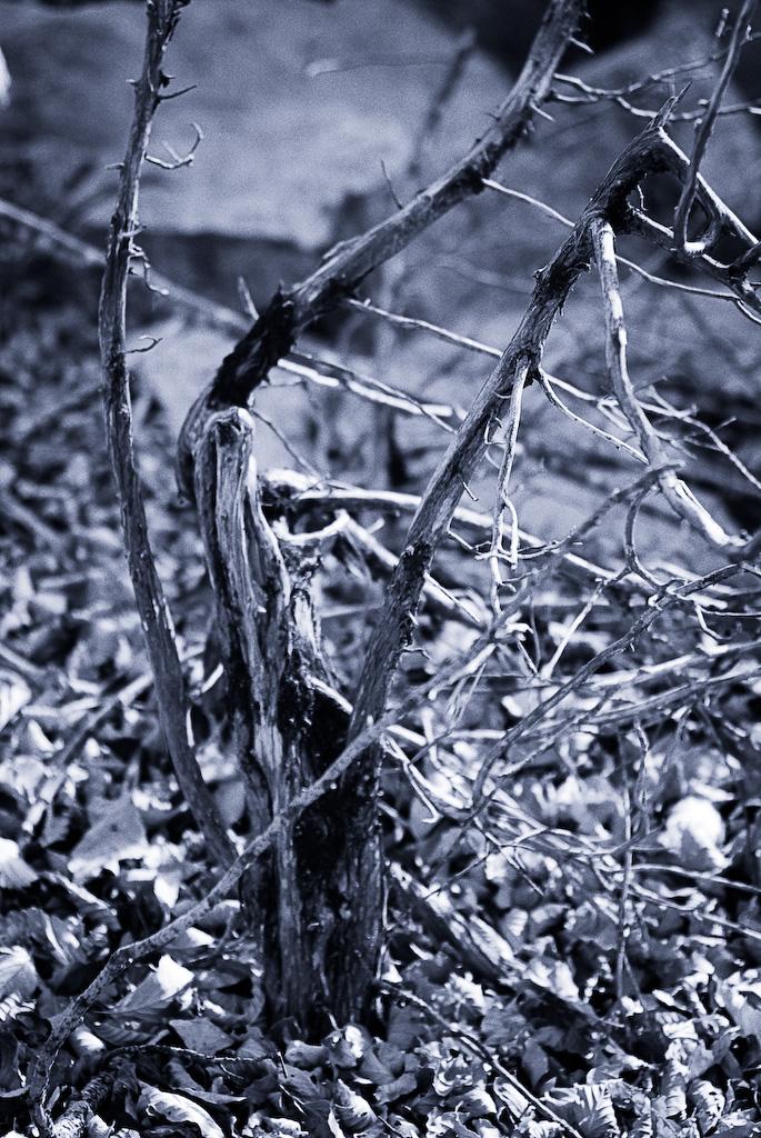 L'arbust