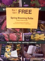 Fall Bulb Sales