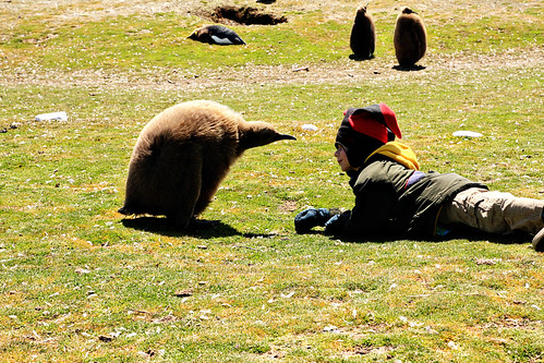 falkland islands 127 copy
