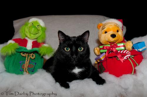2009-12-13 - Christmas Pets-321