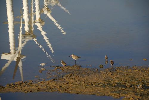 Pájaros en las salinas de Pozo Izquierdo