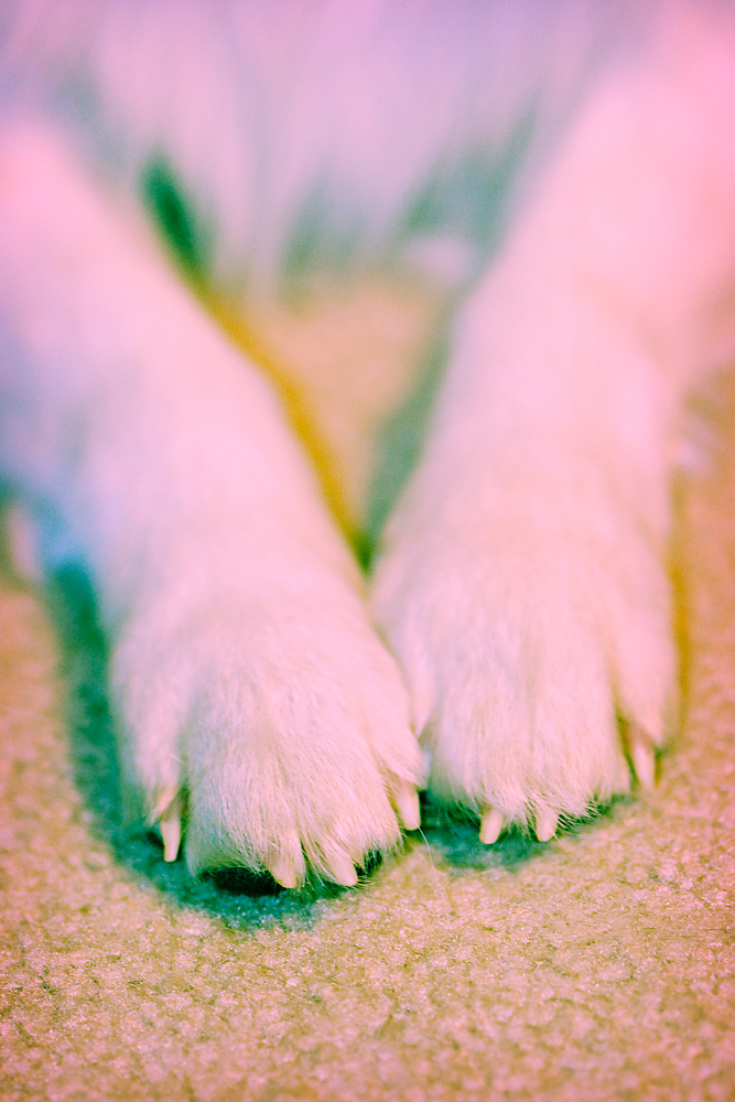 Cross Process 4/30:  Trixie Toes