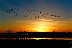 _DSC3534.         Beautiful sunset after days of snowing (christinachui79) Tags: snowgeese birds hills mountain goldencolour sunset evening dust golden colour colours outdoor outdoors winter reflections photography beautiful flickr nikon d750 landscape sky scenery water nature silhouette