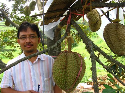 durian Plantera