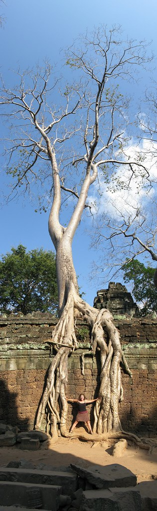 Lboogie holding tree roots apart - Angkor, Cambodia