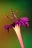 beautiful flower (aziouezmazouz) Tags: flowers friends macro colours bokeh visualart pictureperfect bellissima vibrantcolours superphotographer macromarvels macrolife photoshopcreativo vosplusbellesphotos dragondaggerphoto dragondaggeraward luxtop100