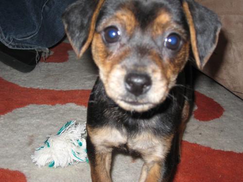 quinn puppy close up