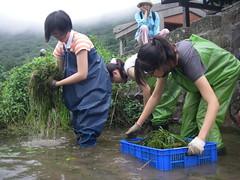 志工在二子坪中進行外來入侵種的清除工作