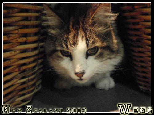 Cat, Franz Josef YHA