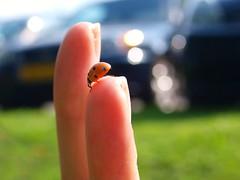 ladybird (lucyphotography) Tags: lights holding bokeh finger ladybird ladybug