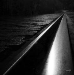 Acero y Piedra (israeltfe sin tiempo...) Tags: rail tenerife tranvia blackwhitephotos superaplus aplusphoto miradafavorita israeltfe