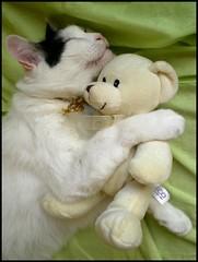Tenderness (sevgi_durmaz) Tags: cute love cat toys soft friendship sleepy lovely cuteness tender tenderness cattoys catlove pamuk mywinners enstantane impressedbeauty vosplusbellesphotos bestofspecialpetportraits
