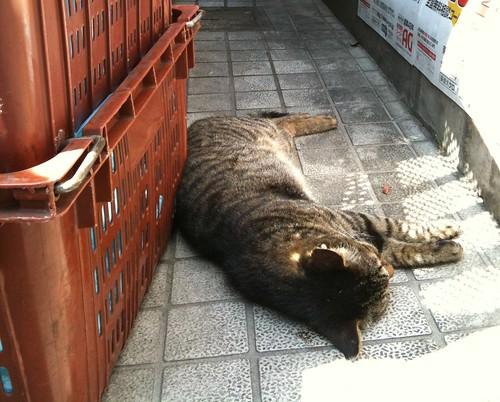 猫(ルミコ)