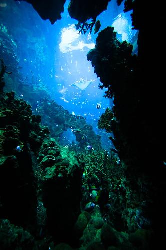 SeaWorld-1023