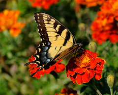 _DSC5288 (pnther60) Tags: backyard roanoke floraandfauna
