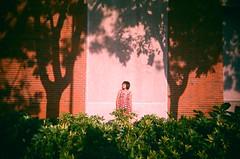 有我的風景 (A WEN 脆麵小姐) Tags: 135 台灣 vivitar 台南 flim 成大 awen 底片機 脆麵小姐 很美的樹影~感謝虧寶