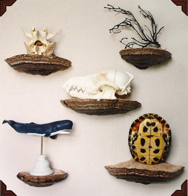 DIY mushroom shelfs