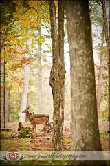 Oh hai, deer
