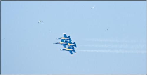 Blue Angels и птичий Wannabes
