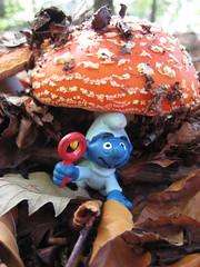 Te tu la vuoi una puff-bacca? (cocciula) Tags: toscana amanita bosco arezzo fungo villaggio puffi accoglienza velenoso tirocinio babypuffo baccagay stabbi puffbacca accipuffolina