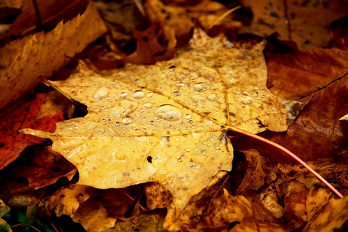 wet leaves.