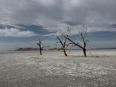 Lakebed Guardians (NoIdentity) Tags: california trees dead flat salt barren plain saltonsea sswinter1109