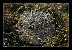 Tejedora (chememoro) Tags: campo araa tela hilos tejer
