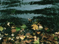 Ripples and Fallen Leaves (Atomic Citrocity) Tags: blue brown fall water colors leaves leaf pond blah twigs