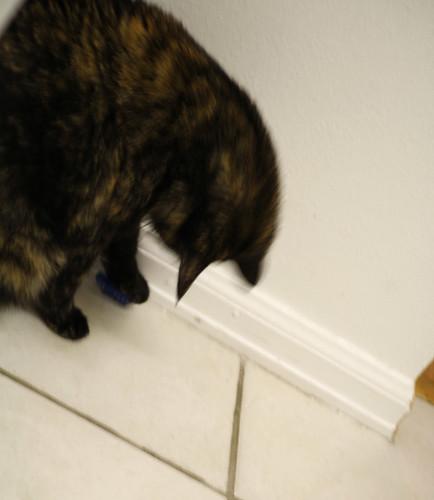 hexbug-cat4