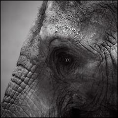 portrait of a lady (anjan58) Tags: portrait elephant eye texture bravo portraitofalady henryjames stealthispicture
