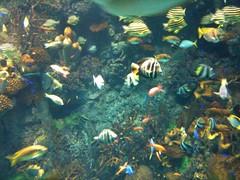 大阪 海遊館 20100411