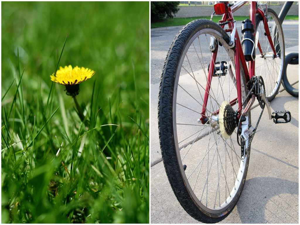 Dandelions & Bike Ride