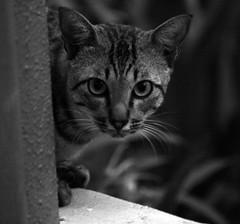 """Boo!"" (Rusdy Rosli) Tags: bw cats dof bokeh monochromatic felines canon400d"
