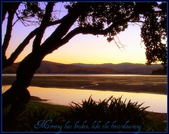 Morning has broken (W J (Bill) Harrison) Tags: ocean trees sunset sea tree leaves weather sunrise coast leaf sand wellington fronds picnik
