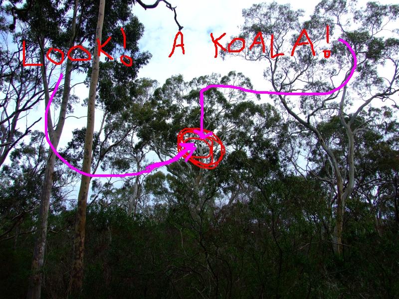 faraway koala