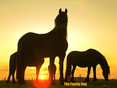 eternal sunshine (The Family Dog) Tags: horses horse cheval caballos cavalos pferde equine equines cheveaux tropilla