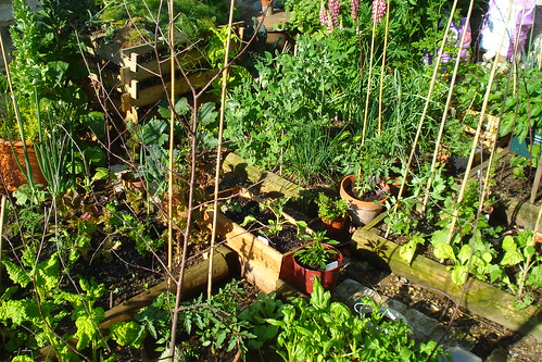My veg patch