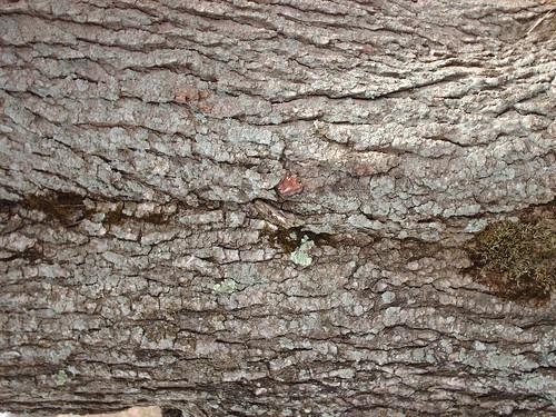 DesignM.ag Bark Texture - 1