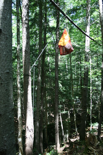 Hanging Food from Bears