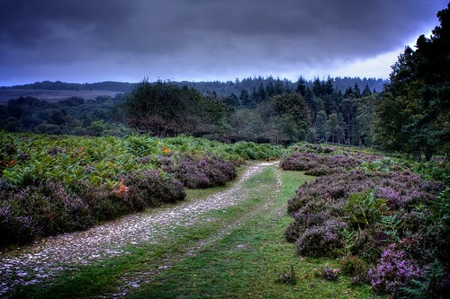 New Forest Landscape by davidgsteadman, on Flickr